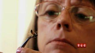 Addicted to Bee Stings | My Strange Addiction