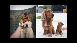Cute Moment of the Animal - Cute Baby Animals Videos Compilation