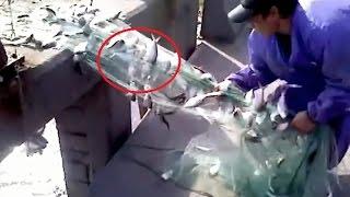 Những cách bắt cá độc nhất vô nhị chỉ có ở Châu Á