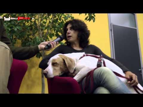 Vivere bene con il cane