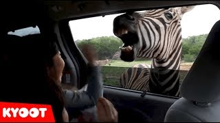 SPOOKED By A Camel! | Funny Kids on a Safari