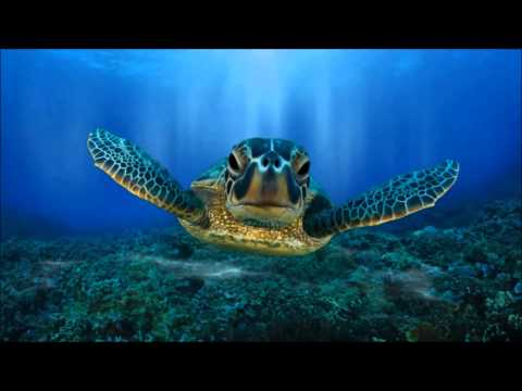 Volunteers Ecuador Turtle Conservation message from the project - Oceans 2 Earth