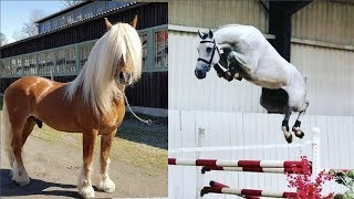 Cute And funny horse Videos Compilation cute moment of the horses   Cutest Horse #15