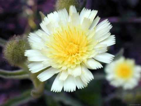 Tchaikovsky - Vals de las flores
