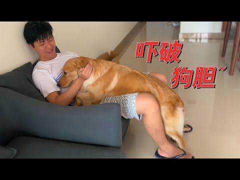 【国庆出去浪】打雷下雨,金毛竟吓得扑到主人怀里,这狗基本废了!