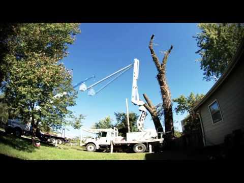 Dangerous Cottonwood Removal