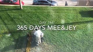 The cleaning of a lawn early in the morning-365 days Mee&Jey (24.05.2019)