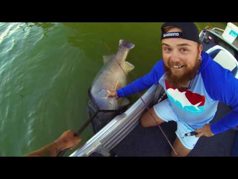 Jim's Fishing Ep5 - Murray Cod