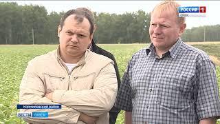 20 районов Омской области приступили к уборке урожая
