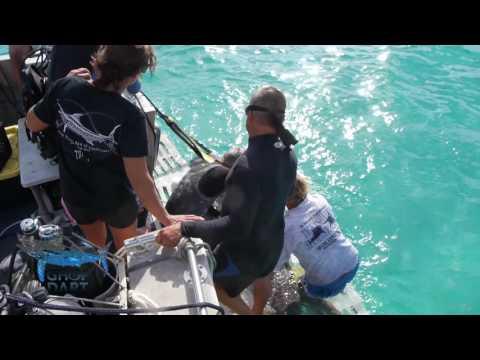 Tiger Beach & Guy Harvey - Science