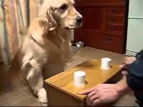 Chó khôn vãi ,chú tuổi gì lừa anh
