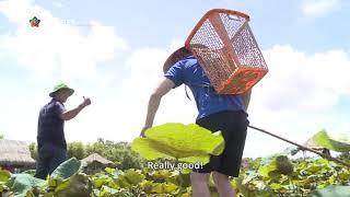 Một ngày làm người Việt - Trải nghiệm mùa nước nổi ở đồng sen Tháp Mười | NETVIET TV