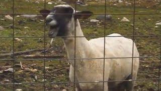 Top 5 Goat Songs (2013 - GOAT REMIXES)