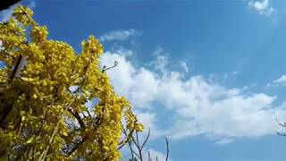 30 min Nature Sounds Moving clouds with Relaxing Music HD countryside