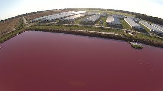 NC Lagoons Hold Billions of Gallons of Hog Feces. Hurricane Florence May Blast it into Waterways