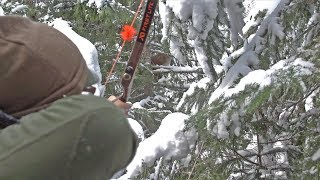 Mountain Lion Hunt With Traditional Archery Gear!