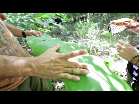 Isla Palenque, Panama | Lessons of the Jungle | The Resort at Isla Palenque