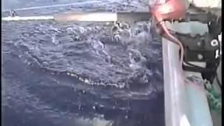 フトツノザメ