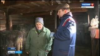 В Омской области стартовала вакцинация домашнего скота