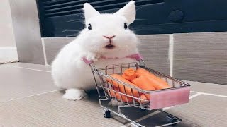 Funny and Cute Baby Bunny Rabbit Videos - Baby Animal Video Compilation (2020)