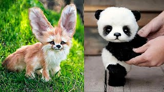 /10 cutest baby animals you need to pet