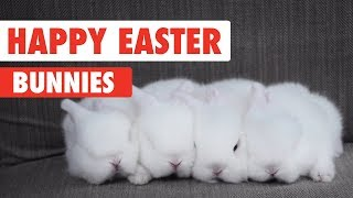 Happy Easter Bunnies Video Compilation