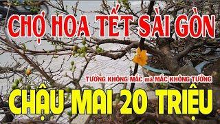 """Đi Chợ Hoa Tết 2018 """"sốc"""" với chậu Mai Bình Định bé xíu giá 20 tr Tưởng không đắt mà Đắt không tưởng"""