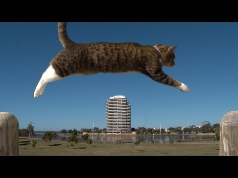 "This Cat Puts The Purr In ""purrkour"""