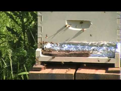 Bee Hive Entrance Reducer Youtube