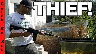 THIEF HURT MY PETS! Trying to Steal my Fish! 100% REAL