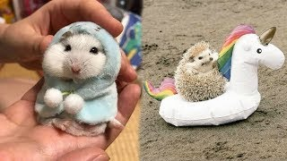 /cute baby animals videos compilation cutest moment of the animals soo cute 90