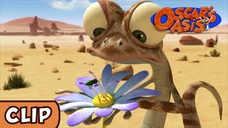 Oscar's Oasis - The Unexpected Hero | HQ | Funny Cartoons