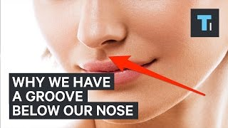 Here's why we have that little groove below our nose
