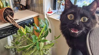 Best Funny Pet Videos Of The - Cute 😹 Cats And 🐶 Dogs Reactions