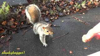 Nervous Li'l Squirrel 27Nov12