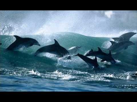 Дельфин - Тебя [Trip-Hop].wmv