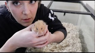 Giving My Hamster A Home Makeover