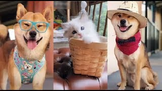 Animals Doing Things - Best Funny & Cute Pets - Dog & Cat Compilation - Try not to laugh #8