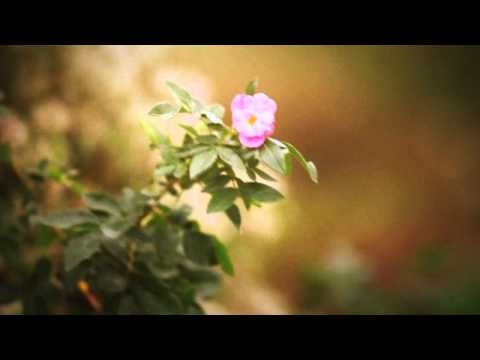 Alzheimer's Awareness - Sunshine