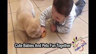 Cute Babies And Pets Fun Together   Funny Pets Video   Funny Pets
