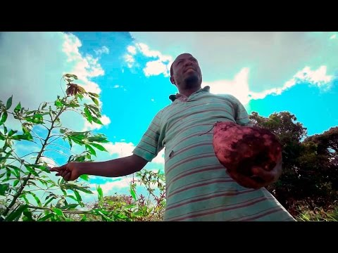Financial Diaries of Smallholder Families