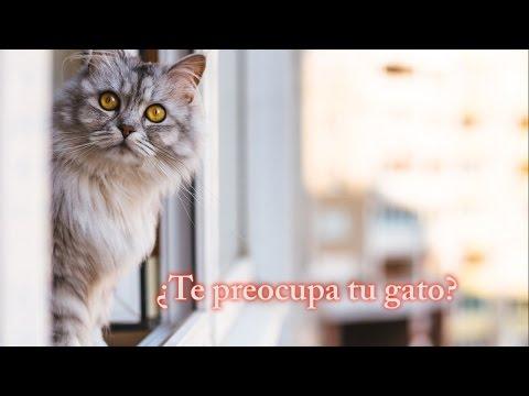 Gatored | Redes para gatos