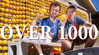 Making Lemonade with the WORLD'S LARGEST Lemon Battery