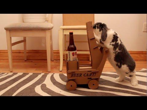 小兔兔,送一瓶酒来!国外有位男子训练女友的兔子进行推送酒服务
