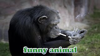 Những con khỉ bá đạo nhất - funny monkey