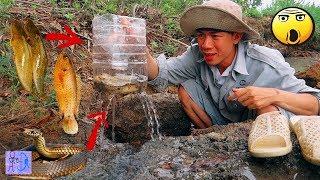 Sinh Tồn Hiệu Quả Với Bẫy Cá Bằng Chai Nhựa & Xém Bắt Được Rắn Khủng.Survival Skills Catch Fish Trap