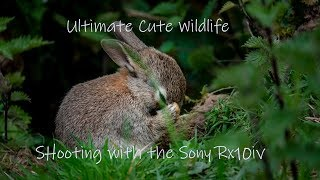 Sony Rx10iv and the Ultimate cute wildlife