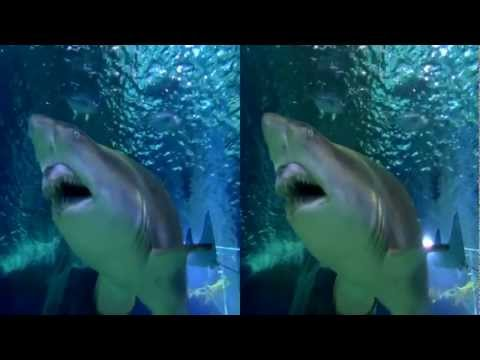 Shark Adventure 3D