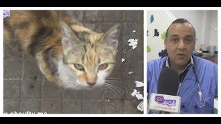 أنا و صاحبي الحيوان :  كل ما يجب معرفته عن تربية القطط   |   أنا و صاحبي الحيوان