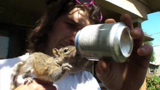 Squirrel baby raised by Portland man becomes his best friend